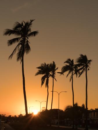 Palm trees sunset orange vertical