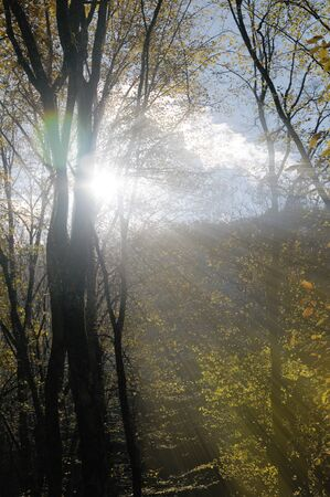 Sunlight making its way through tree branches in the mountains.Azerbaijan,Caucasus Stock Photo