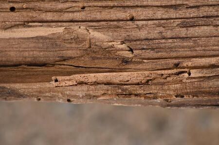 Furnished background with a wooden texture with a non-reflective surface. Banco de Imagens