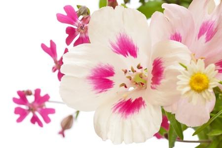 side border: Flower side border white background