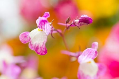 Wild flower pastel wonderland photo