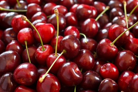 freshly picked: Lots of freshly picked ripe red cherries Stock Photo