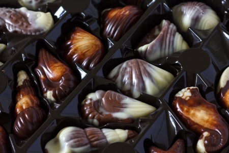 Chocolate sea shells in plastic tray photo