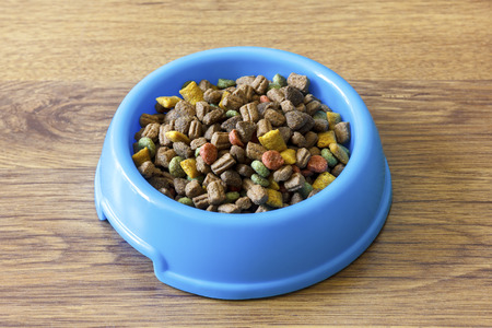 wood laminate: Dry cat food in blue bowl isolated on wood laminate floor.