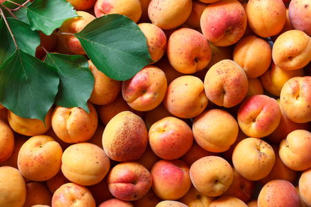 blemishes: Whole orange apricots with red blush and leaves. Background from above.