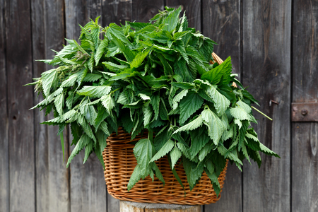 Basket of freshly picked nettles on dark wood background. Banco de Imagens