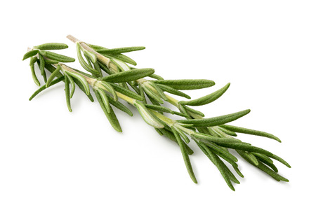Freshly picked sprig of rosemary isolated on white.