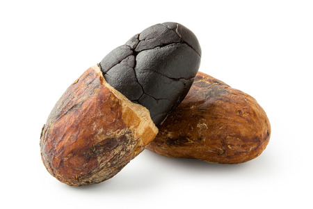 One roasted half peeled and one unpeeled cocoa bean isolated on white.