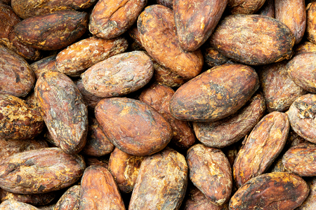 Background of roasted unpeeled cocoa beans. Imagens
