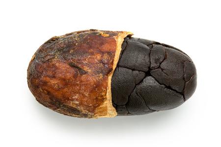 Single roasted half peeled cocoa bean isolated on white.