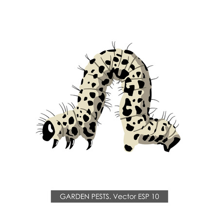 cartoon larva: Detailed drawing of a caterpillar on a white background. Vector illustration