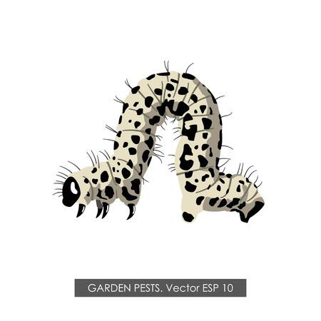 oruga: dibujo detallado de una oruga sobre un fondo blanco. ilustración vectorial Vectores