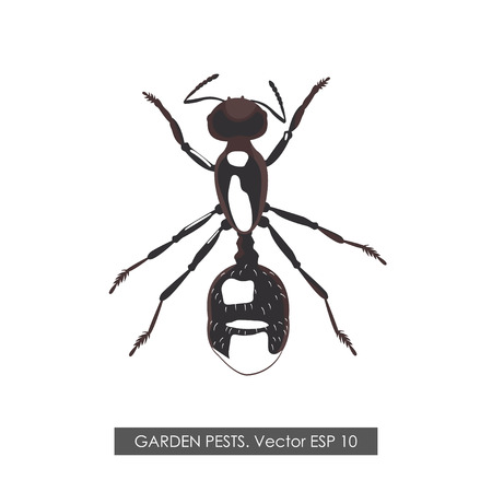 anthill: Detailed drawing ant on white background. Vector illustration