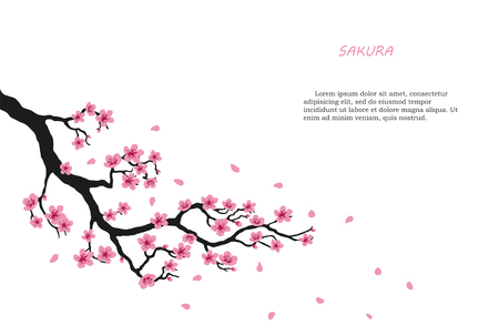 Flowering branch of sakura on a white background. Vector illustration Vettoriali