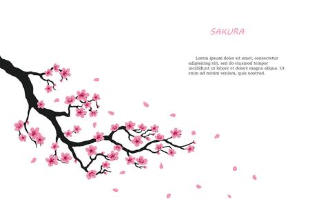 Kwitnąca gałąź sakury na białym tle. Ilustracji wektorowych