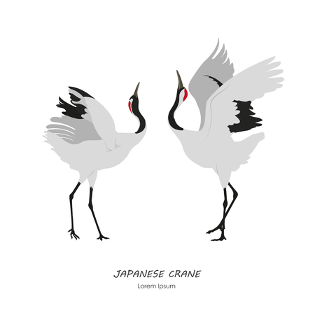 Dwa japońskie żurawie tańczą na białym tle. Ilustracja wektorowa