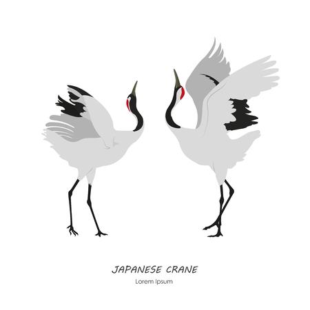Zwei japanische Kräne auf einem weißen Hintergrund tanzen. Vektor-Illustration