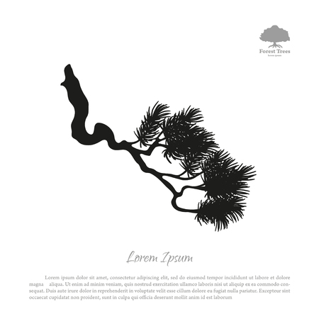 Drawing of branches of old pine tree. Black silhouette on a white background. illustration Illustration