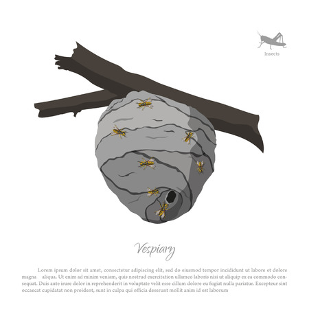 Vespiary drawing. Wasp hive on a branch. Residence flying insects. Vector illustration