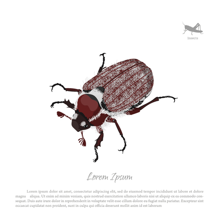 Brown chafer on a white background. Image of garden pests. Vector illustration