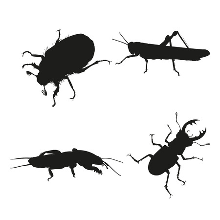 Insects on a white background. Silhouette of a grasshopper, mole crickets and beetles. Vector illustration
