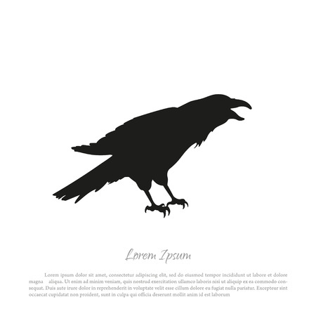 Black crow silhouette on a white background. Raven isolated. Vector illustration