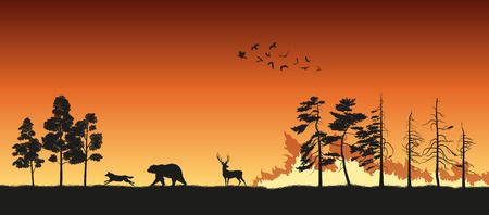 disaster: Black silhouettes of animals on wildfire Illustration