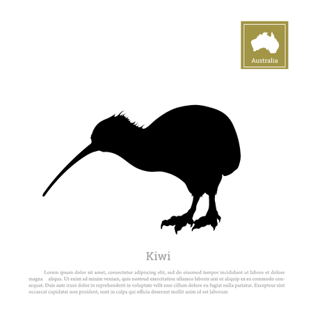 oceania: Black silhouette of kiwi bird on white background. Animals of Australia Illustration