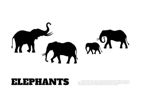 Silhouette nera di una famiglia di elefanti su un bianco . Animali africani
