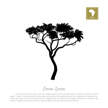 serengeti: Black silhouette of a tree and white background. African nature. Umbrella acacia Illustration