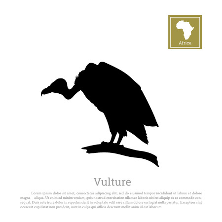 Black silhouette of a vulture on a white background. African animals