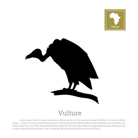 Zwart silhouet van een gier op een witte achtergrond. Afrikaanse dieren