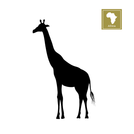 Black silhouette of a giraffe on a white background. Detailed drawing. African animals Illustration