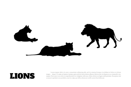 Detailed black silhouette of family of lions on a white background. African animals