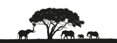 Black silhouette of elephants in savannah. Animals of Africa. African landscape. Panorama of wild nature Çizim