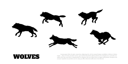 Black silhouettes of flock of wolves on a white background. Illustration