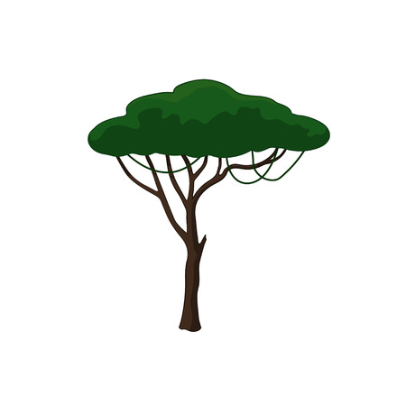 Acacia tree in cartoon style on white background. African nature Иллюстрация