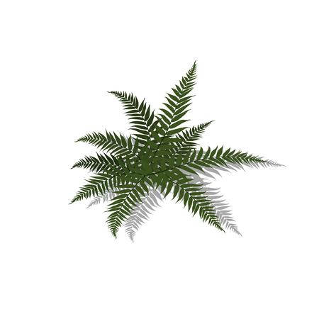 Pianta in stile isometrico. Felce tropicale del fumetto su priorità bassa bianca. Immagine isolata del cespuglio della giungla. Illustrazione vettoriale Vettoriali
