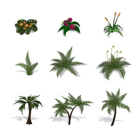 Conjunto de plantas en estilo isométrico. Dibujos animados de árboles tropicales y helechos sobre fondo blanco. Imagen aislada de la palma de la selva y del arbusto. Ilustración vectorial