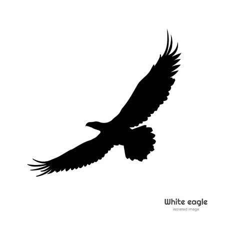 Black silhouette of white eagle. Isolated drawing of american symbol. Tattoo or print image
