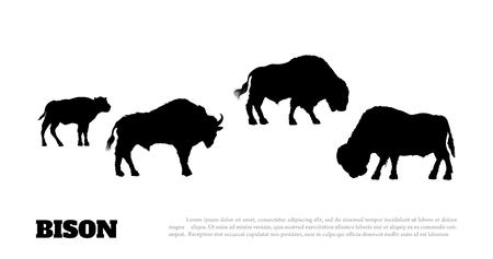 Sagoma nera di bisonte herf su sfondo bianco. Disegno isolato Buffalo. Immagine del toro selvaggio. Animali del Nord America. Illustrazione vettoriale