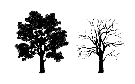 Black silhouette of tree. Forest plant. Isolated image of branches