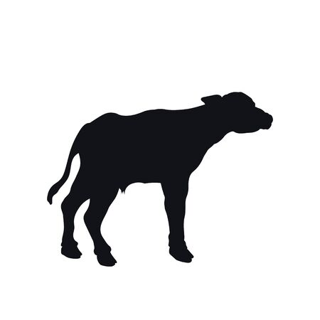 Black silhouette of little african buffalo on white background. Isolated calf icon. Wild animals of Africa. Savannah nature