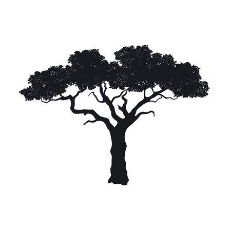Schwarze Silhouette des afrikanischen Baums auf weißem Hintergrund. Isoliertes Bild der Savannennatur. Waldlandschaft von Afrika. Akaziensymbol