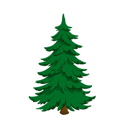 Isolated image of fir. Green pine in cartoon style. Forest tree on white background. Vector illustration