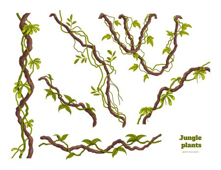 Isolated jungle plants set. Design elements. Liana branch. Tropical forest trees in cartoon style. Rainforest bush on white background. Vector illustration Ilustração