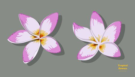 Isolated tropical flowers. Plumeria image. Design elements. Exotic bud. Pink floral plant in cartoon style. Jungle flora
