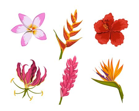 Isolated tropical flowers. Rainforest nature. Design colorful elements. Exotic bud. Floral plants in cartoon style. Jungle flora. Vector illustration