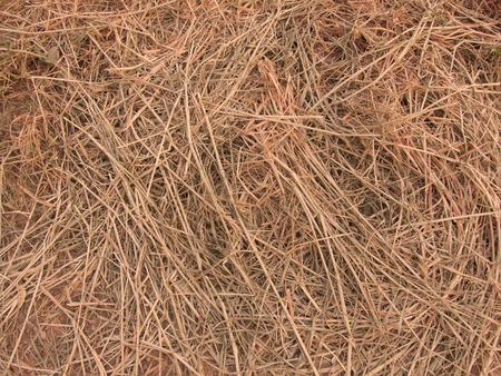 hayrick: Dry hay straw stack texture Stock Photo