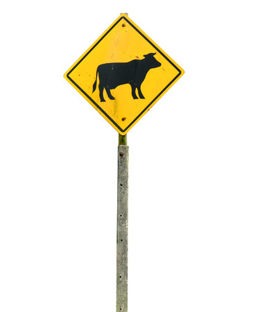 grung: grung cow warning road sign isolated on white